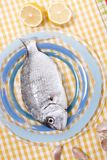 Gilt-head bream fish. On a plate Stock Photos