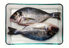 Gilt-head bream fish. Healthy food. Two sea bream in a glass container. On white background. Seen from overhead. The gilt-head (sea) bream (Sparus aurata) is a Stock Images