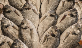 Gilt-head bream. At the fish market Royalty Free Stock Images