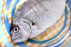 Gilt-head bream fish. On a plate stock image