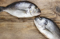 Gilt-head bream fish on wooden background. Mediterranean tavern, delicious meal. Write down here your best recipe for fish plate. Kissing fishes Stock Photo