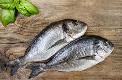 Gilt-head bream fish on wooden background. Mediterranean tavern, delicious meal Royalty Free Stock Photo
