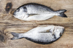 Gilt-head bream fish on wooden background. Mediterranean tavern, delicious meal. Write down here your best recipe for fish plate Royalty Free Stock Photo