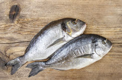 Gilt-head bream fish on wooden background. Mediterranean tavern, delicious meal. Write down here your best recipe for fish plate Royalty Free Stock Photography