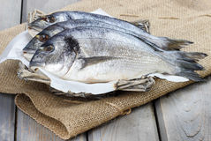 Gilt-head bream fishes in wicker basket Stock Photos