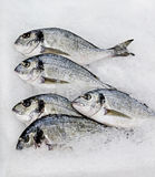 Gilt-head bream. Fresh gilt-head bream or dorado fish, lying in the ice Stock Photo