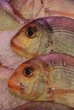 Gilt-head bream. Fresh gilt-head bream at a fish market Stock Photos