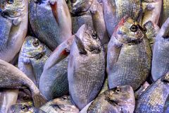 Gilt-head bream. On display in the Fish market in the Kemeraltı bazaar, Izmir, Turkey stock image