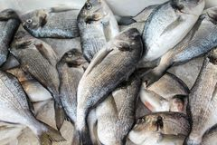 Gilt head bream. Fish closeup background taste food delicious kitchen cook cooking dinner launch fresh protein diet stock images