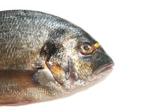 Gilt head bream head Stock Image