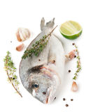 Gilt-head bream with herbs and spices stock photo