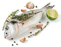 Gilt-head bream with herbs and spices royalty free stock photography