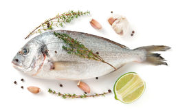 Gilt-head bream with herbs and spices isolated on white. Background Stock Photography
