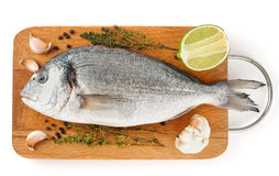 Gilt-head bream with herbs and spices isolated on white stock images