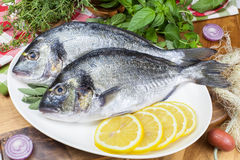 Gilt-head Bream. Mediterranean seafood concept. Fresh sea bream with thyme and lemon Stock Photography