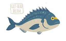 Gilt-Head Bream. Vector illustration royalty free illustration