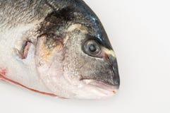Gilt head fish. Detailed view of a gilt head fish stock photos