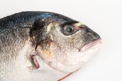Gilt head fish. Detailed view of a gilt head fish royalty free stock photos