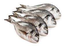 Gilt-head fish food Royalty Free Stock Photo