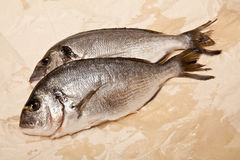 Gilt-head sea bream fish Stock Photo
