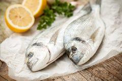 Gilt-head sea bream fish Royalty Free Stock Photos