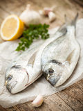 Gilt-head sea bream fish Stock Photo