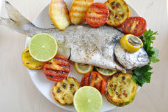 Gilt head Sea bream Fish Royalty Free Stock Photos
