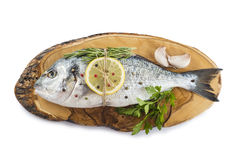 Gilt-head sea bream with spices and herbs Royalty Free Stock Images