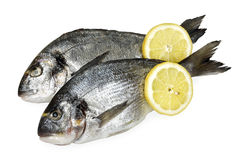 Gilt-head seabream. Seabream with lemon slice isolated on white background royalty free stock image