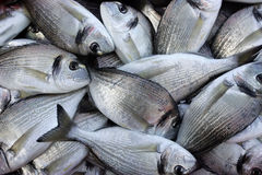 Gilt poll. Fresh fishes in some fish market, travel Europe Royalty Free Stock Photo