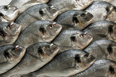 Gilt poll. Fresh fishes in some fish market, travel Europe Stock Image