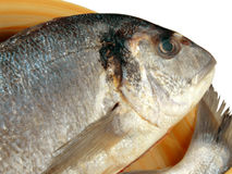 Gilthead bream. Close-up of a gilthead bream ready to be cooked Royalty Free Stock Images