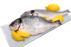 Gilthead Bream Royalty Free Stock Image