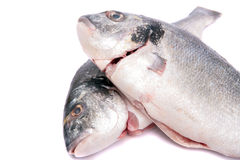 Gilthead Bream Stock Photos