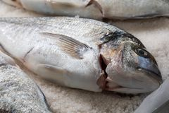 Gilthead breams cooked in salt. stock images