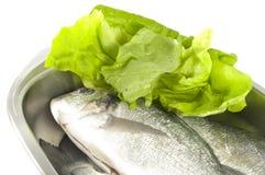 Gilthead e salada Imagem de Stock