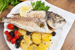 Gilthead fish Stock Images