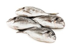 Gilthead fish food Stock Photography