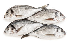 Gilthead fish food Stock Photos