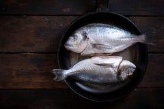 Gilthead fish Royalty Free Stock Photography