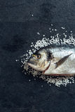 Gilthead fish Royalty Free Stock Photo
