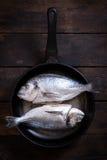 Gilthead fish in pan Stock Photos