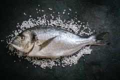 Gilthead fish on salt Stock Images