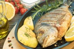Gilthead grillé Image stock