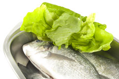 Gilthead and salad Stock Image