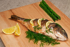 Gilthead sea bream. Stock Images