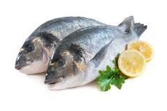 Gilthead sea breams fish Stock Photography