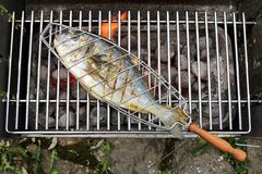 Gilthead seabream Stock Image