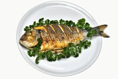 Gilthead seabream. Grilled sea bream with parsley exempted Royalty Free Stock Photos