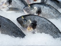 Gilthead seabream (Sparus aurata). In ice on a fish market stock images